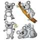 A Group of Koalas  - GraphicRiver Item for Sale
