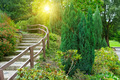 beautiful summer park and sunrise - PhotoDune Item for Sale
