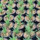 Aloe plants in flower pot - PhotoDune Item for Sale