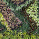 Beautiful foliage garden wall - PhotoDune Item for Sale