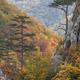 Tasnei Gorge, Romania - PhotoDune Item for Sale