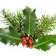 Holly leaves and berries with a pine branch on a white background - PhotoDune Item for Sale