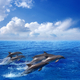 Dolphin jumping - PhotoDune Item for Sale
