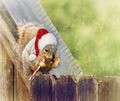Christmas Squirrel Sitting on Fence in the Winter - PhotoDune Item for Sale