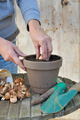 woman planting flower bulb in pot  - PhotoDune Item for Sale