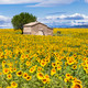 Vertical landscape with sunflower - PhotoDune Item for Sale