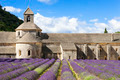 Abbey of Senanque and lavender flowers - PhotoDune Item for Sale