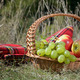 Picnic basket with blanket - PhotoDune Item for Sale