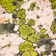 Lichen And Rose Quartz Abstract - PhotoDune Item for Sale