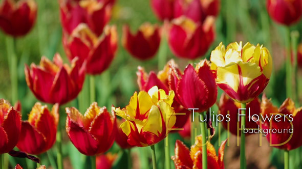 VideoHive Flowers in Spring Garden 9519469