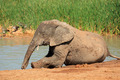 Playful African elephant - PhotoDune Item for Sale