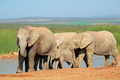 African elephants at waterhole - PhotoDune Item for Sale