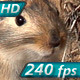 Gopher Pricked up His Ears - VideoHive Item for Sale