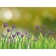 Stationery with a Garden of Violet Flowers - GraphicRiver Item for Sale