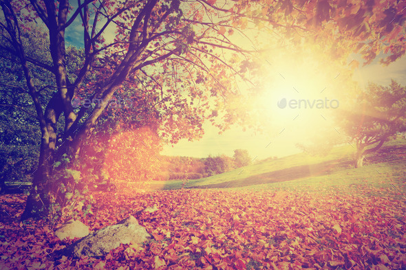 Autumn, fall landscape with a tree. Sun shining through leaves. Vintage