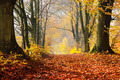 Autumn, fall forest. Path of red leaves towards light. - PhotoDune Item for Sale