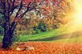 Autumn, fall landscape. Tree with colorful leaves. Panorama - PhotoDune Item for Sale