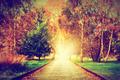 Autumn, fall park. Wooden path towards the sun, light - PhotoDune Item for Sale