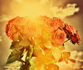 Red wet roses flowers bouquet on sky background. Vintage - PhotoDune Item for Sale