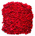 Red rose petals background, pattern. - PhotoDune Item for Sale