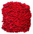 Red rose petals background, pattern. - PhotoDune Item for Sale