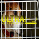 Dog in Cage 2 - VideoHive Item for Sale