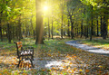 beautiful autumn park with paths and benches - PhotoDune Item for Sale