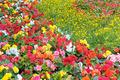 bright garden flowers - PhotoDune Item for Sale