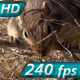 Funny Gopher Gnaws Branch - VideoHive Item for Sale