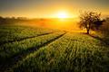 Rural landscape in golden light - PhotoDune Item for Sale