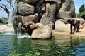 African elephant in natural environment standing under the waterfall. - PhotoDune Item for Sale