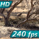 Gophers Near Burrows - VideoHive Item for Sale