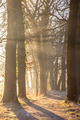 Sun beams through Rimed Trees - PhotoDune Item for Sale