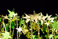 Shining golden Christmas stars on black background - PhotoDune Item for Sale