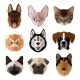 Pets Portrait Flat Icon Set - GraphicRiver Item for Sale