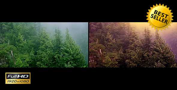 Flying Over Misty & Magical Forest 2 Versions