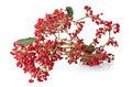 Christmas arrangement - PhotoDune Item for Sale
