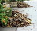 foliage - PhotoDune Item for Sale