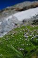 Alpine moss - PhotoDune Item for Sale