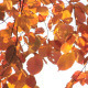 Autumn Leaves Background - VideoHive Item for Sale