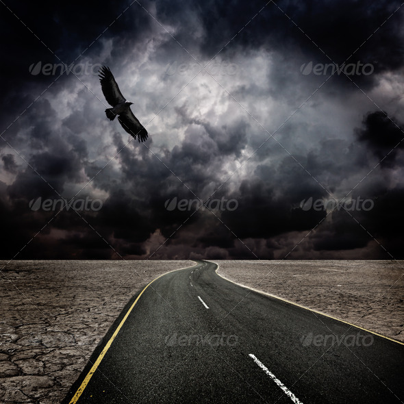 Storm, bird, road in desert - Stock Photo - Images