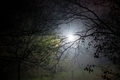 Creepy park at night with illumination - PhotoDune Item for Sale
