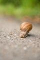Snail on the road - PhotoDune Item for Sale
