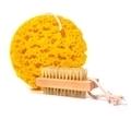 Synthetic bath sponge - PhotoDune Item for Sale