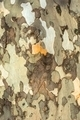 Closeup photo of a tree trunk - PhotoDune Item for Sale