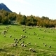 Flock of Sheep ( Miniature Effect) 1 - VideoHive Item for Sale
