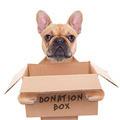 donation box dog - PhotoDune Item for Sale