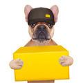 dog postman - PhotoDune Item for Sale