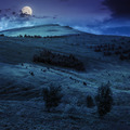 coniferous forest on a hillside at night - PhotoDune Item for Sale
