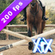 Horse Jumping Oxer - VideoHive Item for Sale
